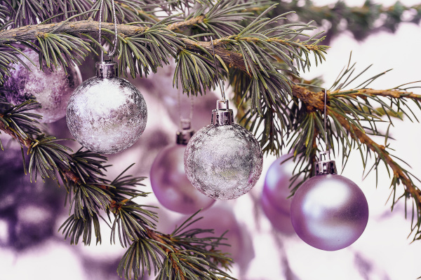 Discover the latest winter and Christmas images here!